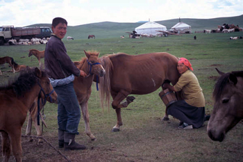 Picture of pastoralists milking mares