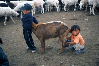 Picture of children with goats